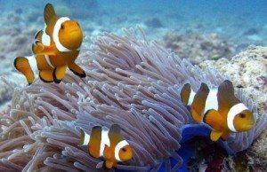 merlin divers dive shop diving center dive school phuket