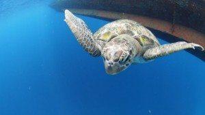 phuket diving prices thailand