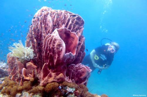 Scuba Dive Bangtao Beach Phuket