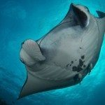 Dive Trip Similan Islands, Koh Bon, Koh Tachai and Richelieu Rock – 3 Days 11 Dives