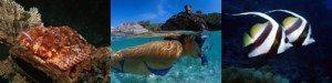 Site de plongée:  Kamala Rock, Kamala Bay